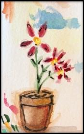 Little flowers in a pot